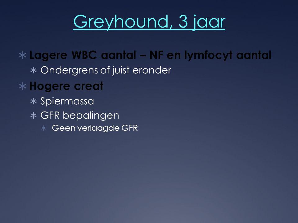 Greyhound, 3 jaar Lagere WBC aantal – NF en lymfocyt aantal