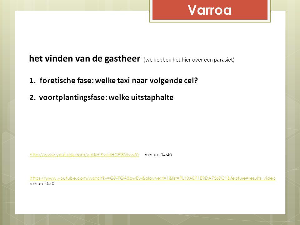 Varroa het vinden van de gastheer (we hebben het hier over een parasiet) foretische fase: welke taxi naar volgende cel