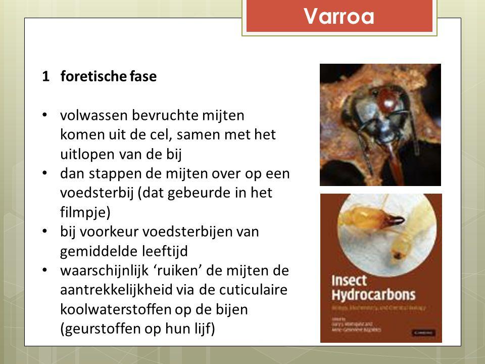 Varroa 1 foretische fase