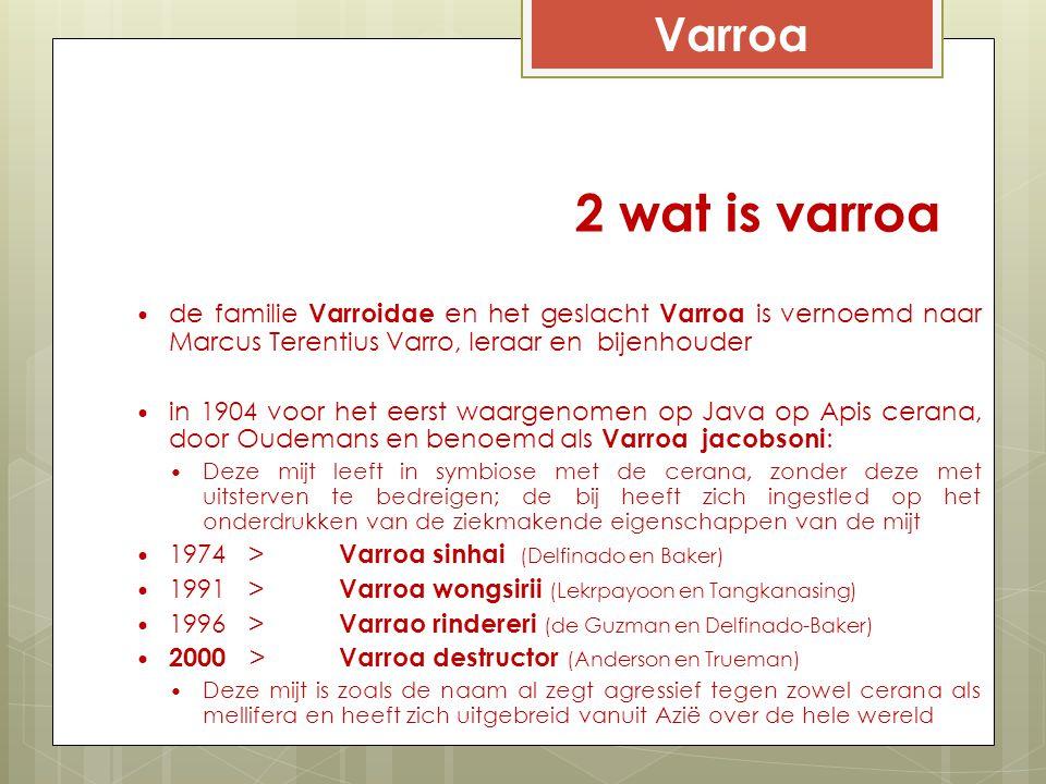 Varroa 2 wat is varroa. de familie Varroidae en het geslacht Varroa is vernoemd naar Marcus Terentius Varro, leraar en bijenhouder.