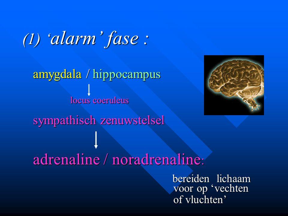 (1) 'alarm' fase : locus coeruleus sympathisch zenuwstelsel