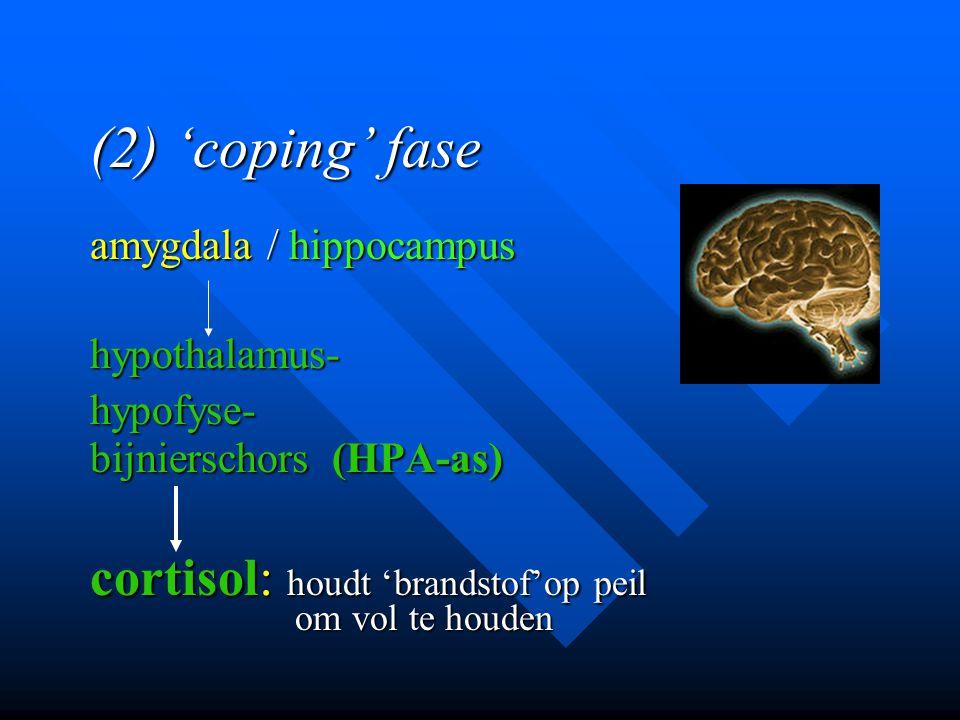 (2) 'coping' fase cortisol: houdt 'brandstof'op peil