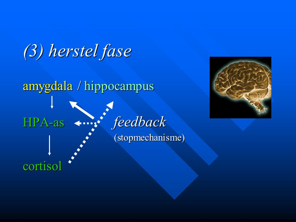 (3) herstel fase amygdala / hippocampus HPA-as feedback cortisol