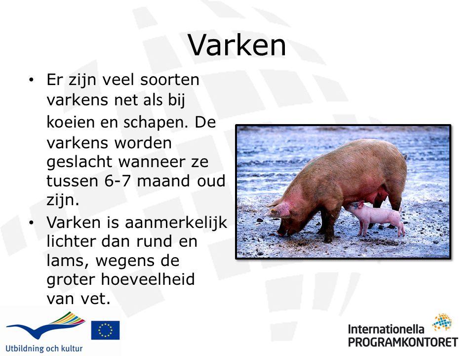 Varken Er zijn veel soorten varkens net als bij koeien en schapen. De varkens worden geslacht wanneer ze tussen 6-7 maand oud zijn.