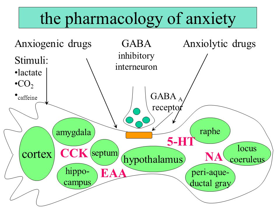 the pharmacology of anxiety