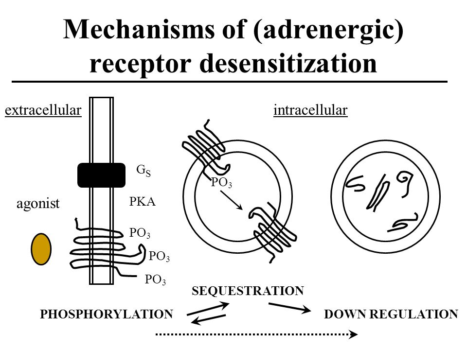 Mechanisms of (adrenergic) receptor desensitization