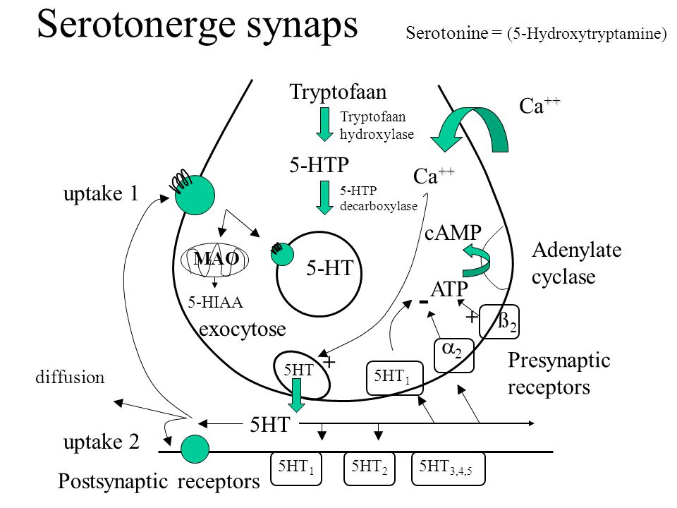 Serotonine = (5-Hydroxytryptamine)