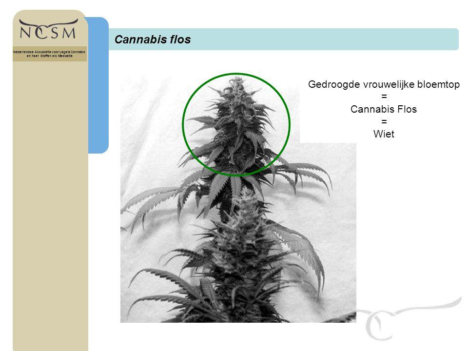 Cannabis flos Gedroogde vrouwelijke bloemtop = Cannabis Flos Wiet