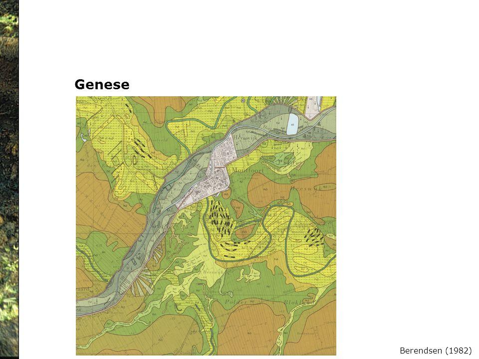 Genese Berendsen (1982)