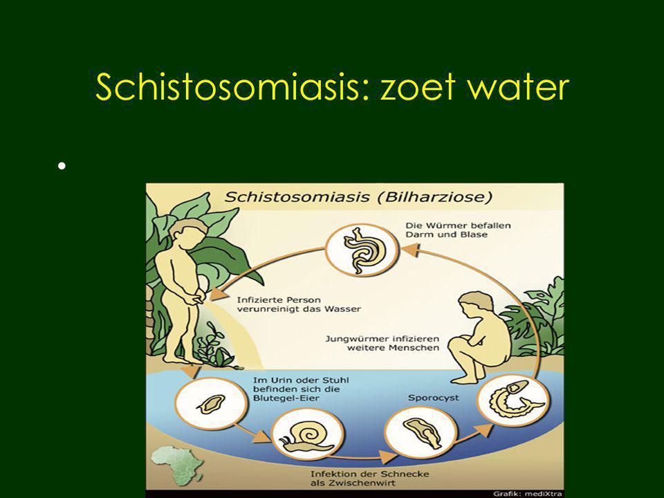 Schistosomiasis: zoet water