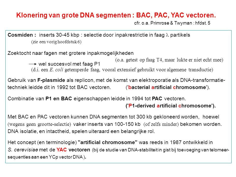 Klonering van grote DNA segmenten : BAC, PAC, YAC vectoren.