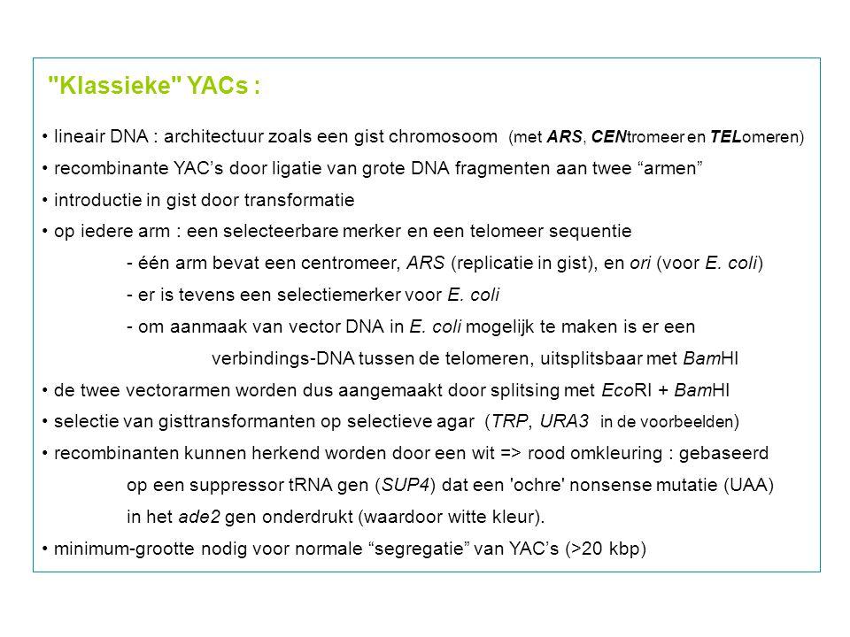 Klassieke YACs : lineair DNA : architectuur zoals een gist chromosoom (met ARS, CENtromeer en TELomeren)