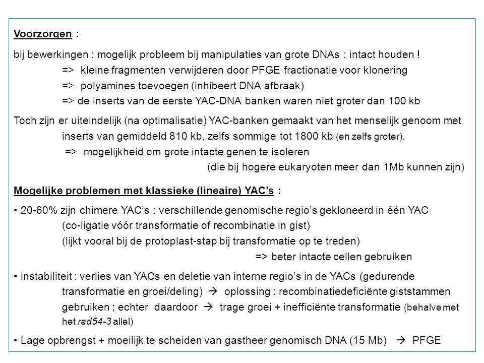 Voorzorgen : bij bewerkingen : mogelijk probleem bij manipulaties van grote DNAs : intact houden !