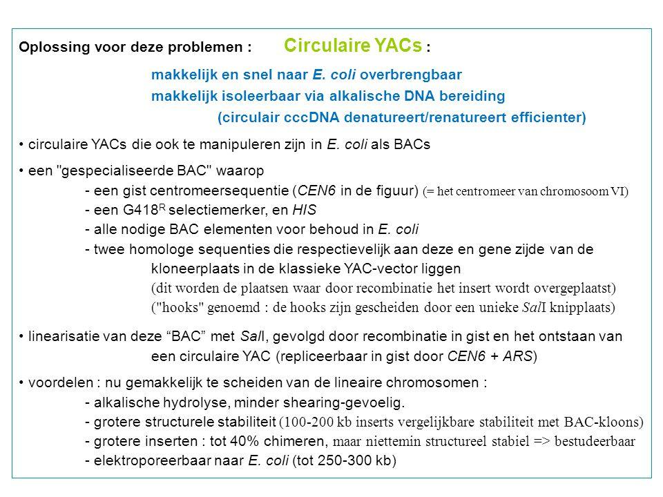Oplossing voor deze problemen : Circulaire YACs :