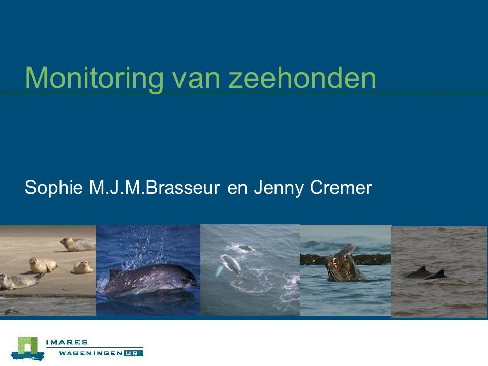 Monitoring van zeehonden