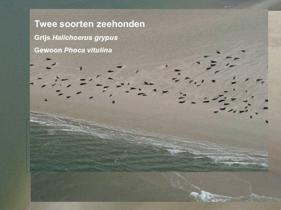 Twee soorten zeehonden
