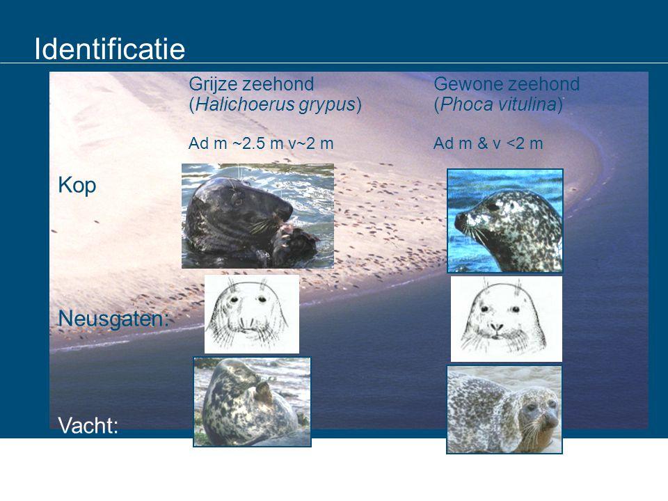 Identificatie Kop Neusgaten: Vacht: