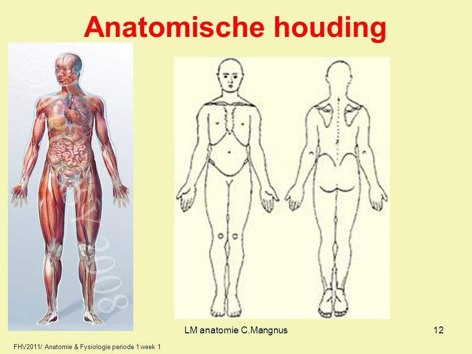 Anatomische houding LM anatomie C.Mangnus 12 12
