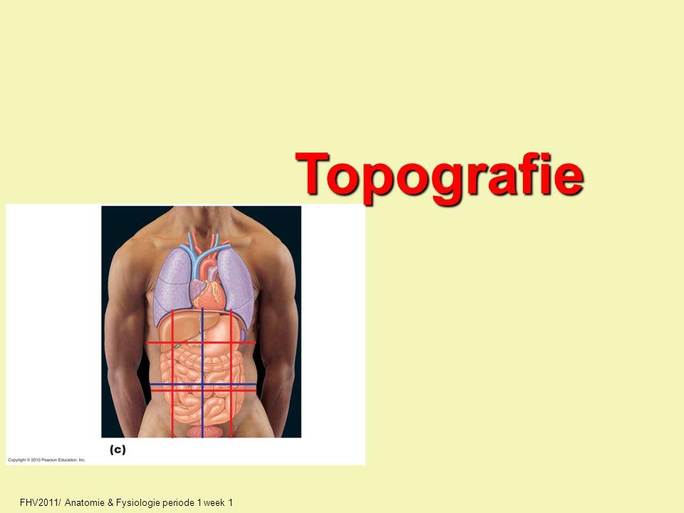 Topografie FHV2011/ Anatomie & Fysiologie periode 1 week 1 17