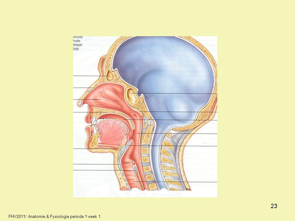 23 FHV2011/ Anatomie & Fysiologie periode 1 week 1 23 23