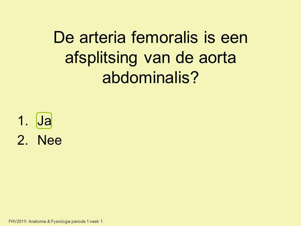 De arteria femoralis is een afsplitsing van de aorta abdominalis