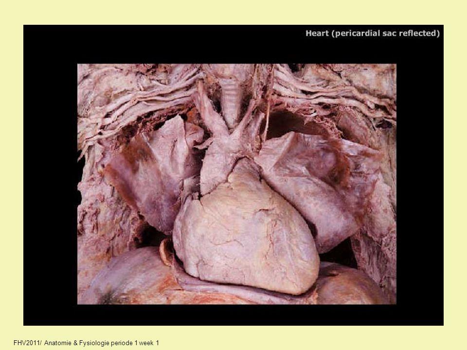 11_A2245_unlabeled.jpg FHV2011/ Anatomie & Fysiologie periode 1 week 1