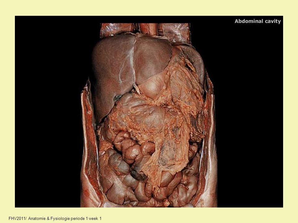 03_A2287_unlabeled.jpg FHV2011/ Anatomie & Fysiologie periode 1 week 1