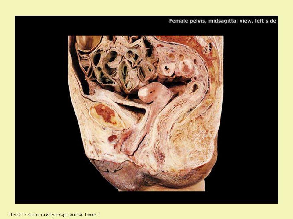 A2330_unlabeled.jpg FHV2011/ Anatomie & Fysiologie periode 1 week 1