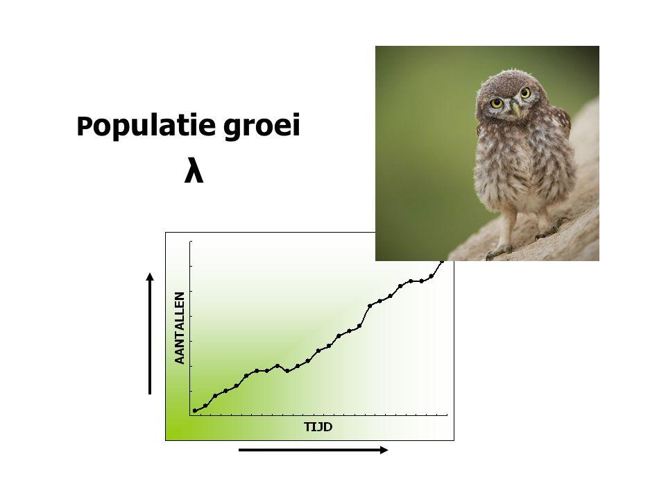 Populatie groei λ