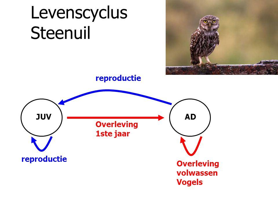 Levenscyclus Steenuil