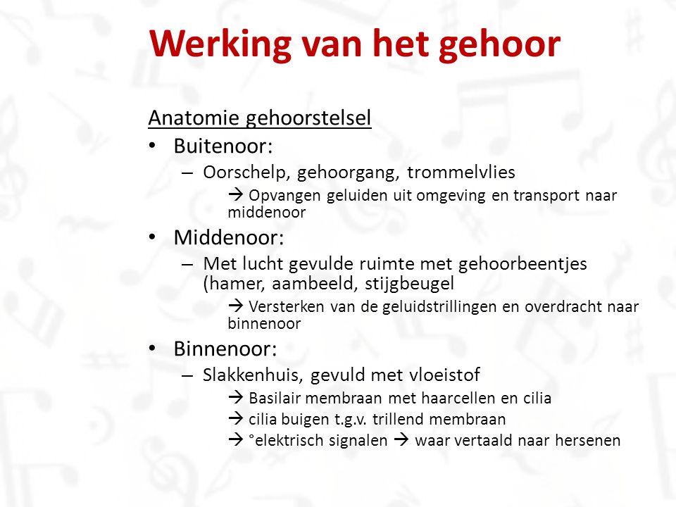 Werking van het gehoor Anatomie gehoorstelsel Buitenoor: Middenoor:
