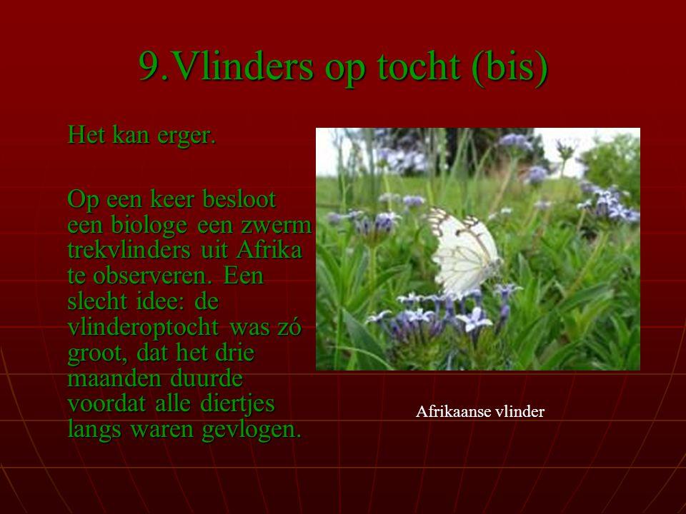 9.Vlinders op tocht (bis)