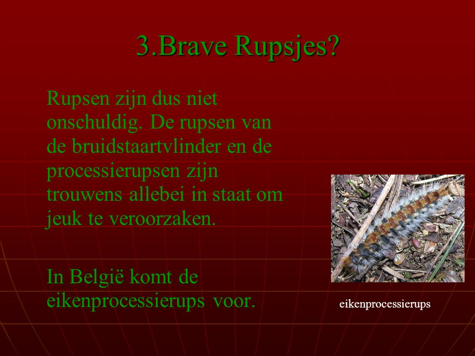 3.Brave Rupsjes