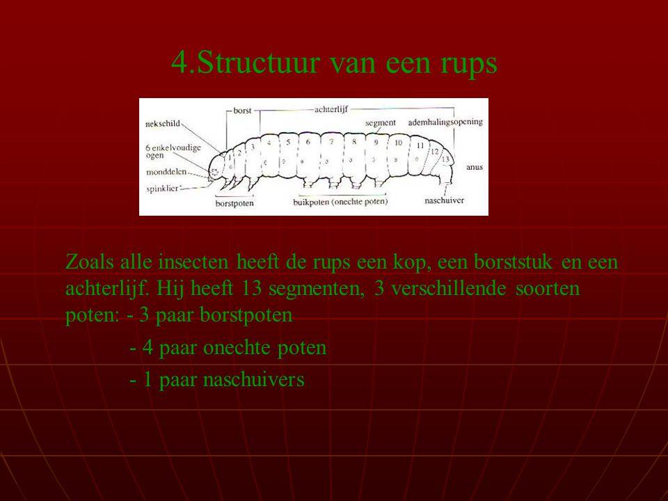 4.Structuur van een rups