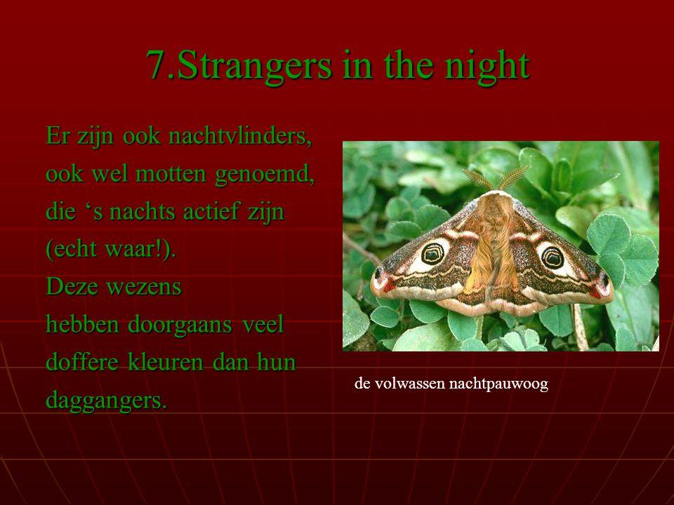 7.Strangers in the night Er zijn ook nachtvlinders,