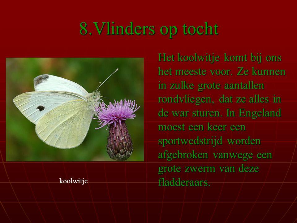 8.Vlinders op tocht