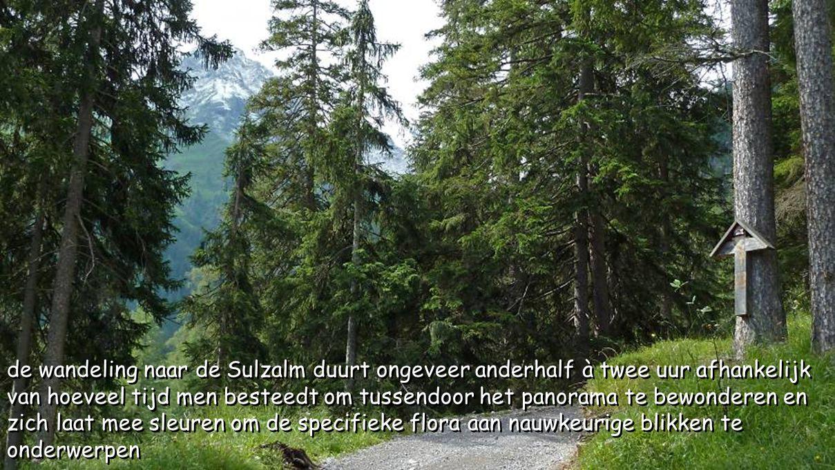 de wandeling naar de Sulzalm duurt ongeveer anderhalf à twee uur afhankelijk van hoeveel tijd men besteedt om tussendoor het panorama te bewonderen en zich laat mee sleuren om de specifieke flora aan nauwkeurige blikken te onderwerpen