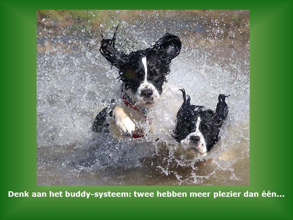 Denk aan het buddy-systeem: twee hebben meer plezier dan één...