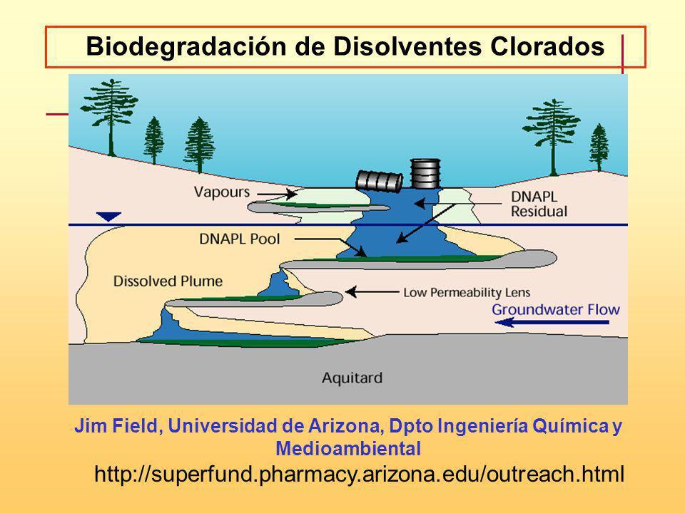 Biodegradación de Disolventes Clorados