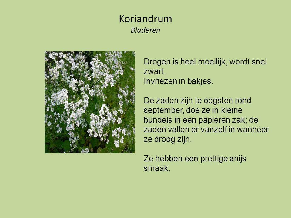 Koriandrum Bladeren Drogen is heel moeilijk, wordt snel zwart.
