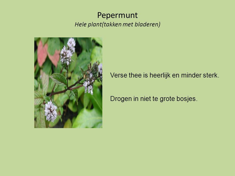Pepermunt Hele plant(takken met bladeren)