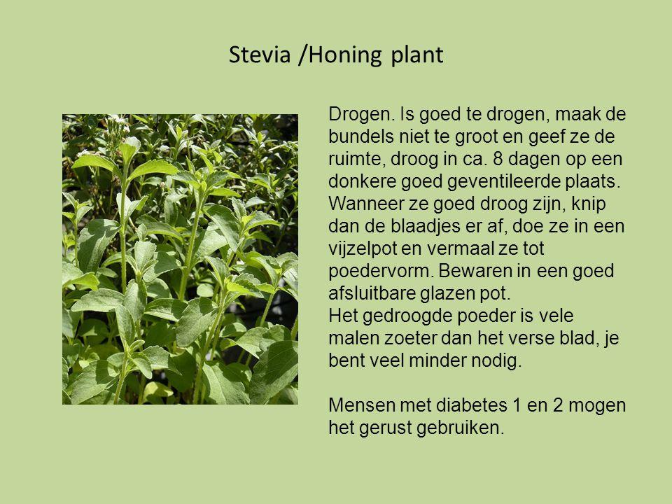 Stevia /Honing plant