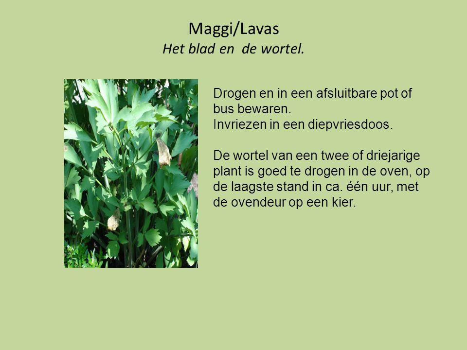 Maggi/Lavas Het blad en de wortel.