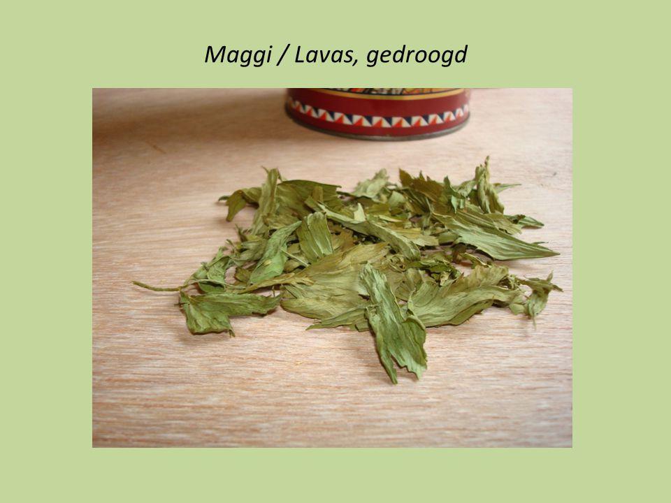 Maggi / Lavas, gedroogd
