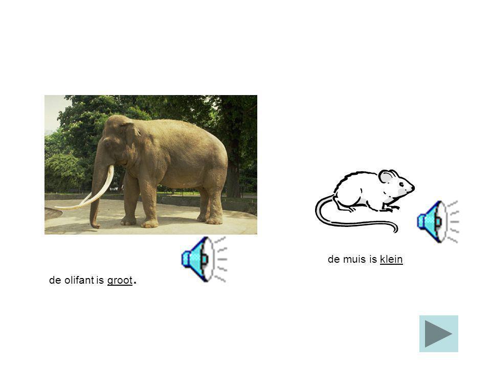 de muis is klein de olifant is groot.