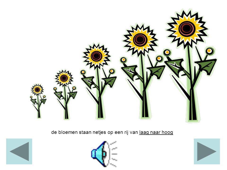 de bloemen staan netjes op een rij van laag naar hoog