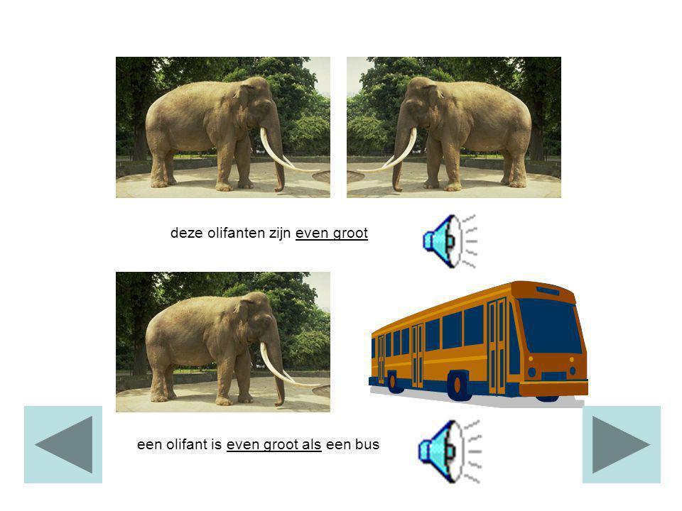 deze olifanten zijn even groot