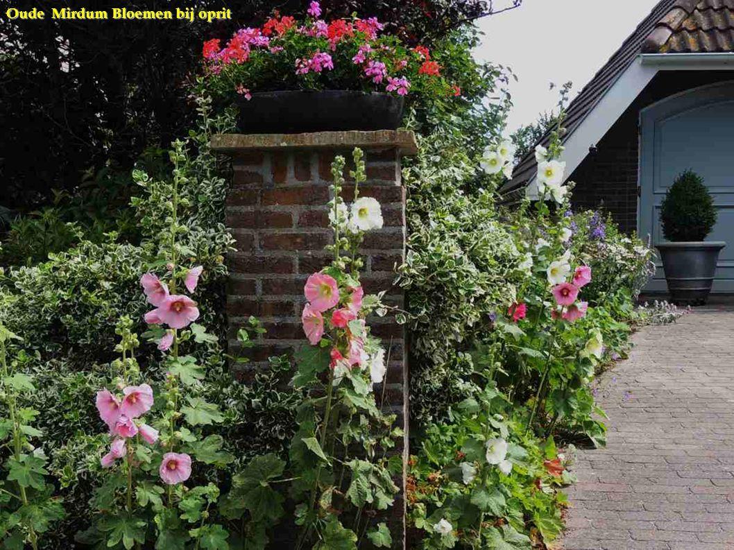 Oude Mirdum Bloemen bij oprit