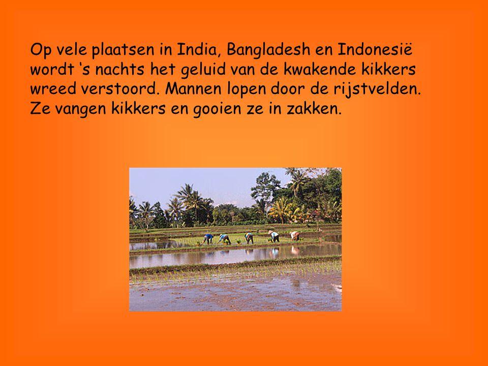 Op vele plaatsen in India, Bangladesh en Indonesië wordt 's nachts het geluid van de kwakende kikkers wreed verstoord.