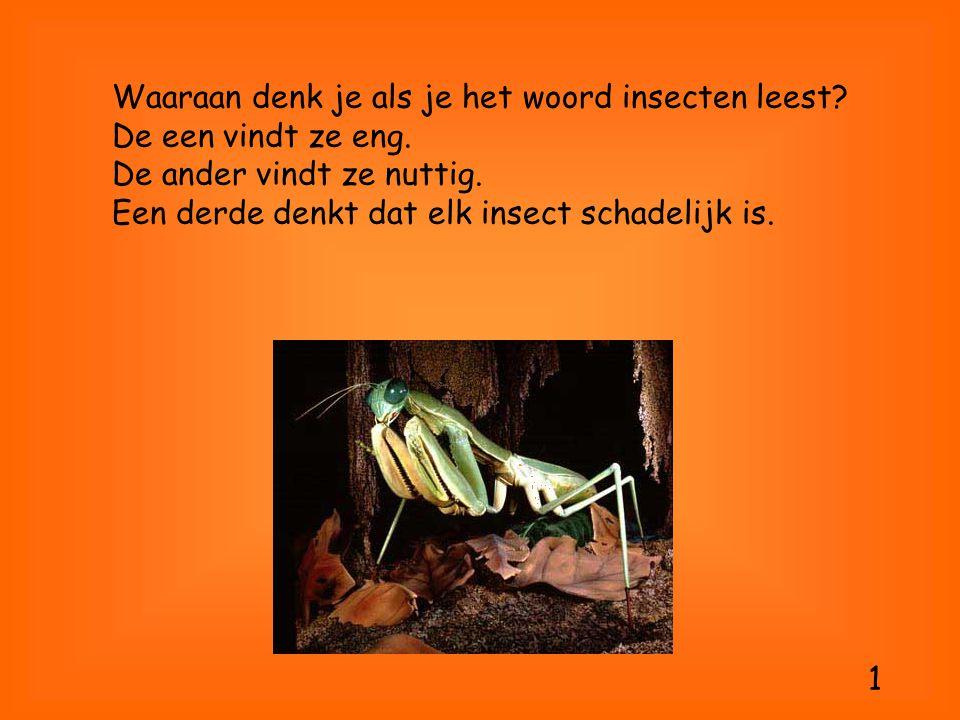Waaraan denk je als je het woord insecten leest. De een vindt ze eng